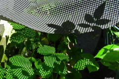 Dorothy-IMG_4570-Shadows1