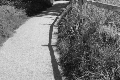 barbara-glick-IMG_2014-shadow-3-BW-WEB