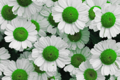 Brian-G-Phillips-Green-Dots-1080