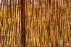 Michael-Chin-Reed-curtain