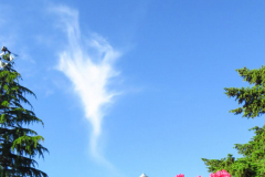 Dorothy-IMG_3861-Wisp-of-Cloud1