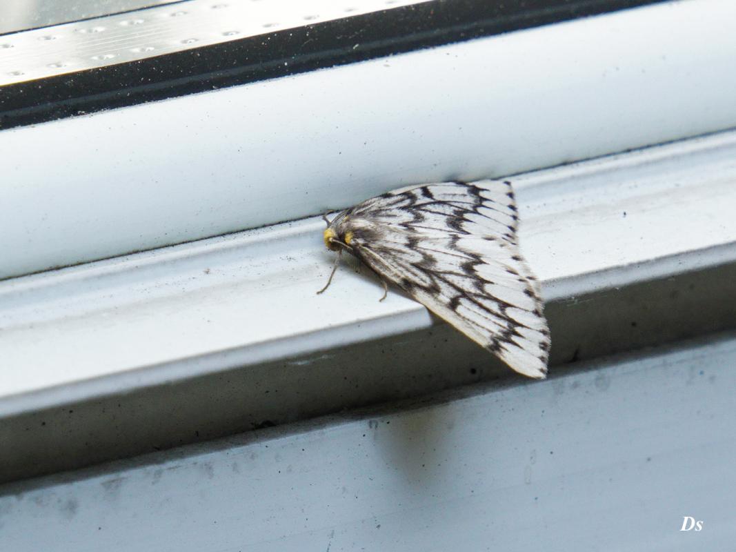 Dorothy-Singleton-DSC07900.psd-Moth1