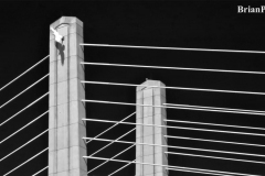 Brian-G-Phillips-Bridge-2