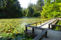 Angela-Burnett-Bridge-and-water-lilies968