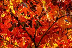 Chuck-Vaugeois-Autumn-001