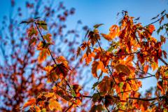 Chuck-Vaugeois-Autumn-004
