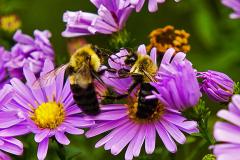 Dorothy-dorothy_3_Open-Theme-Bees2DSC08099