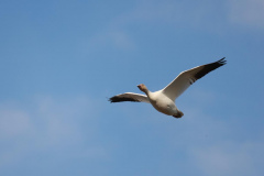 Hendy-A-bird-flying