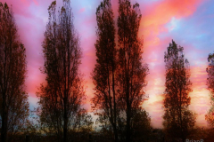 Brian-G-Phillips-3-Tree-Sunset-copy-1080