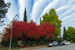 Dorothy-dorothy_1_OpenGallery-Autumn-Clouds-IMG_6804