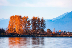 Hendy-Hendy-Yellow-trees-and-blue-mountains