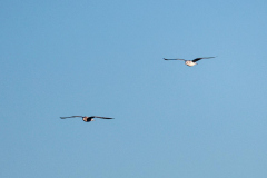 Hendy-Two-birds-with-open-wings