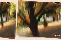 Peter-Lau-Peter-Lau-110820-Trees