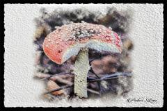 Peter-Lau-Peter-Lau-112020-Mushroom-Watercolor-effect