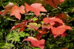 Angela-Burnett-2.-Autumn-leaves-0977
