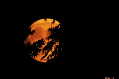 Brian-G-Phillips-One-Harvest-Moon-1080