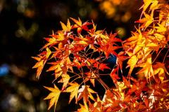 Chuck-Vaugeois-Autumn-002