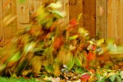 Dorothy-dorothy_1_Autumn-DSC09173-4
