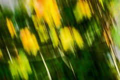 Dorothy-dorothy_3_Autumn-DSC09279-Fall-Colours2
