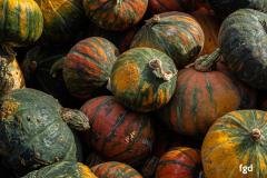 Francis-Pumpkins-02