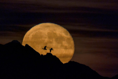 Paul-Rennie-Moonrise-over-mountains-with-birds