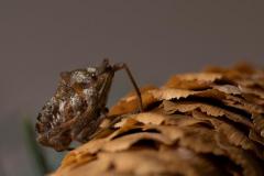 Paul-Rennie-Table-bug2