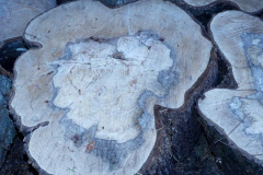 Angela-Burnett-3.-Aged-tree-heart-151
