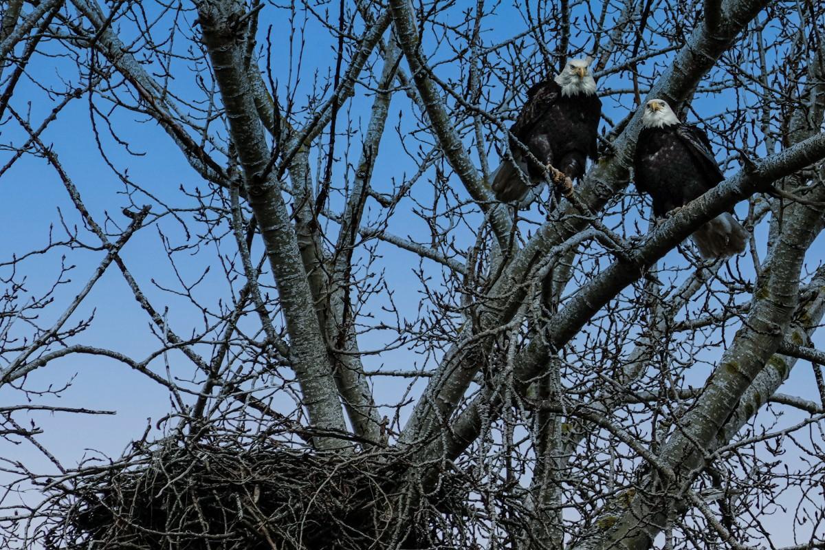 Francis-Eagle-Couple-on-South-Dike
