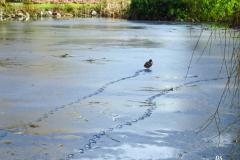 Dorothy-Dorothy_2_Fine-Art-Photo-Footprints-on-Ice1-IMG_9204