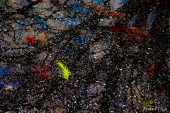 Michael-Chin-Pine-leaf