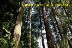 Francis-Tree-Story-1