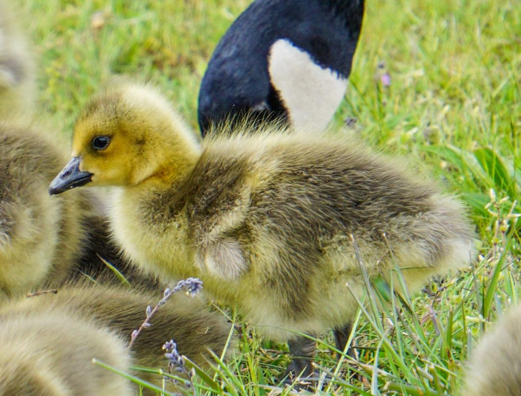 John-R-Gosling-closeup-3