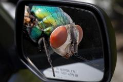 Paul-Rennie-Fly-in-car-mirror