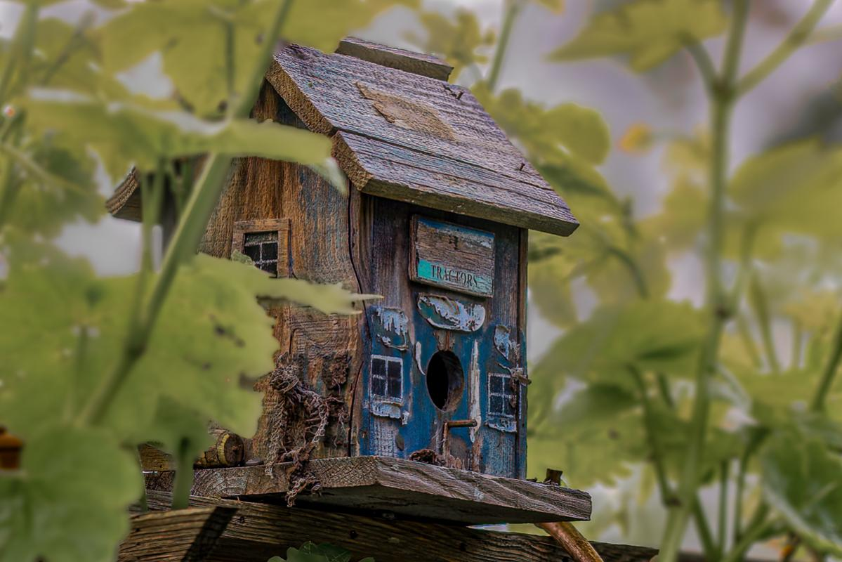 Chuck-Vaugeois-London-Heritage-Farm-05