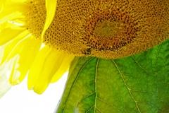 Dorothy Singleton - DSC08129 Honeycomb1