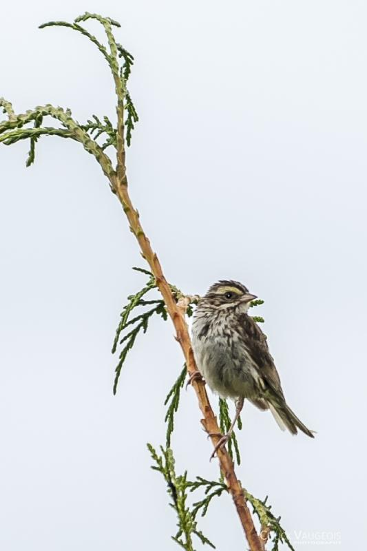Chuck-Vaugeois-0005-Birds