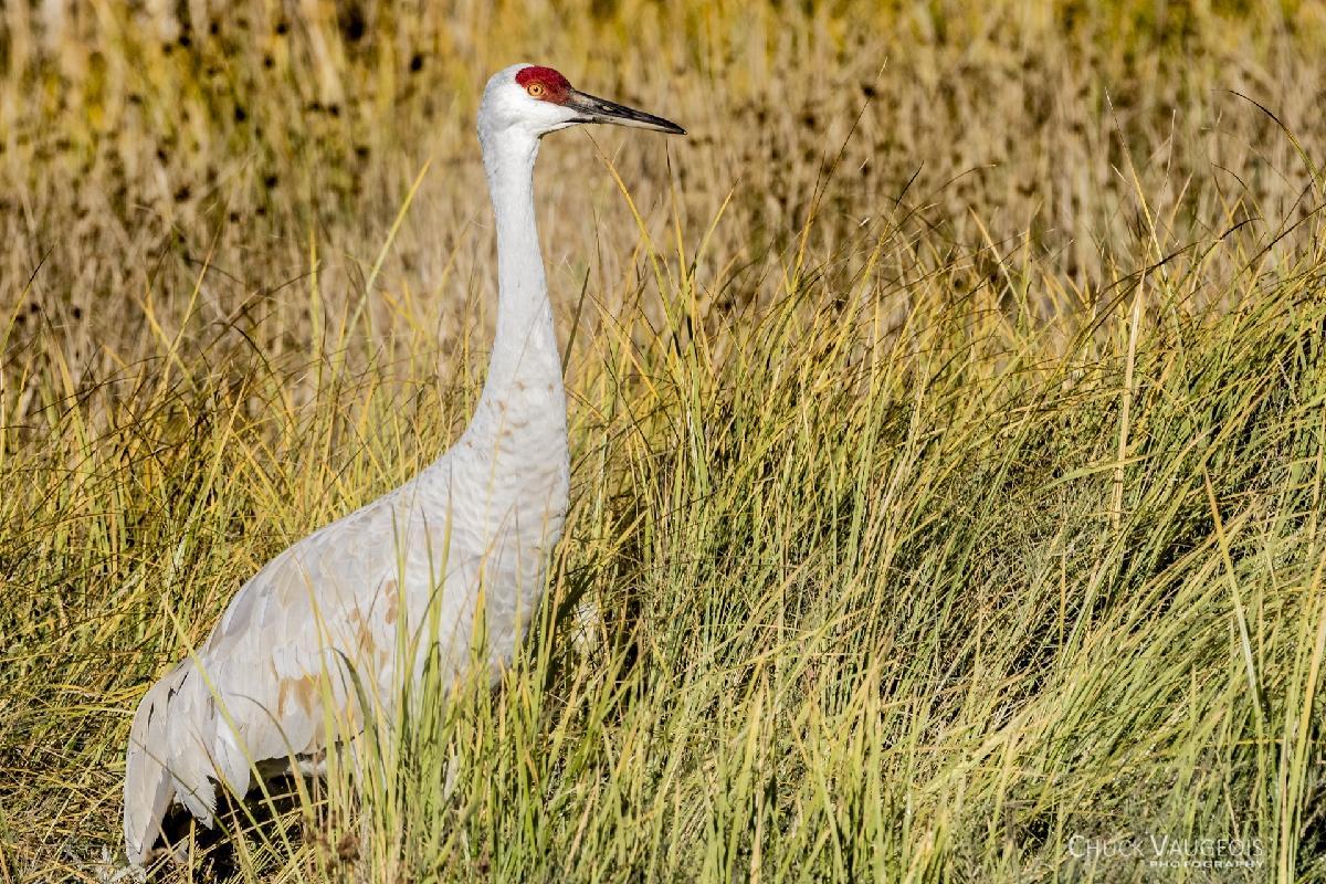 Chuck-Vaugeois-0013-Birds