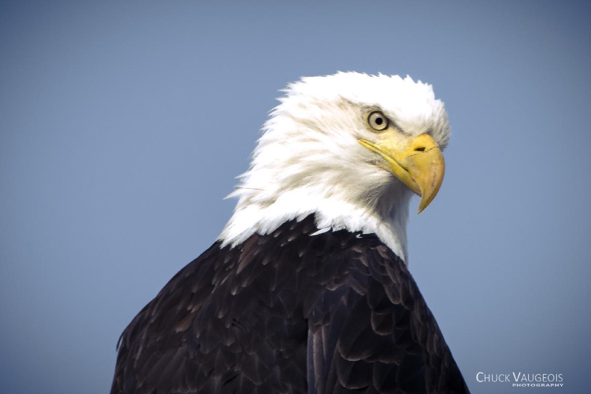 Chuck-Vaugeois-0017-Birds