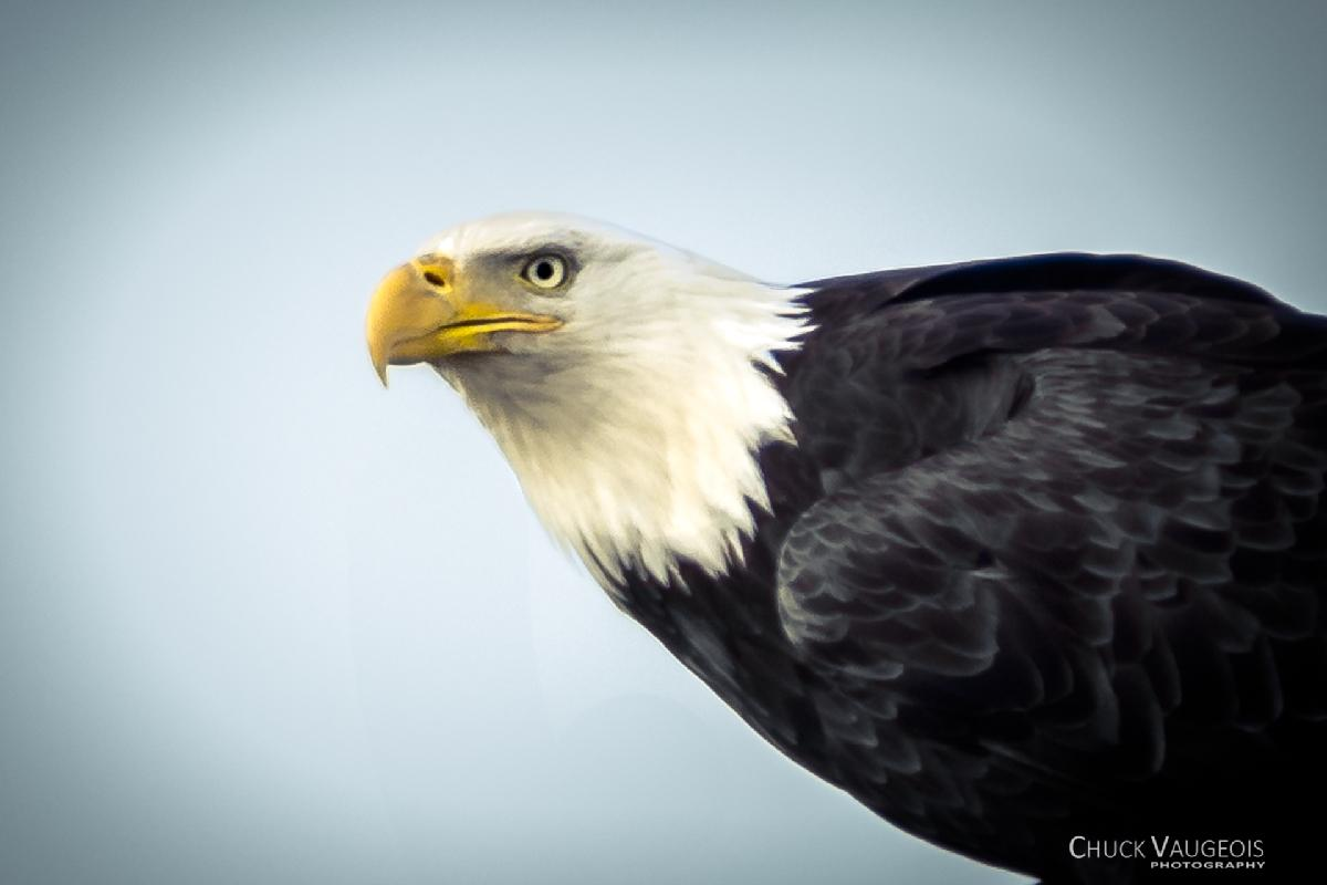 Chuck-Vaugeois-0018-Birds