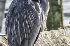 Chuck-Vaugeois-0012-Birds