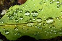 Dorothy Singleton - dorothy_1_Macro Water crystals1 (IMG_0848)