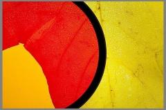 Peter-Lau-Peter06Fall-Color