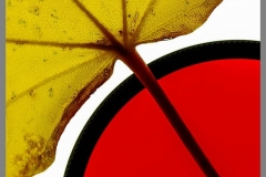 Peter-Lau-Peter10Fall-Color