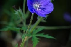 Michael-C-01_Blue-flower