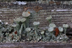 Paul Rennie - Rennie_3_tiny lichen garden