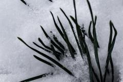 gerry boretta - snow gerry  (2)