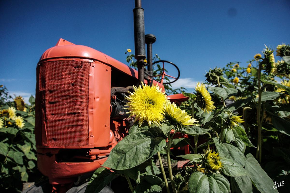 Dorothy-DSC07062-Richmond-Country-Farms1