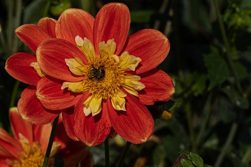 Francis-Sunflowers-05