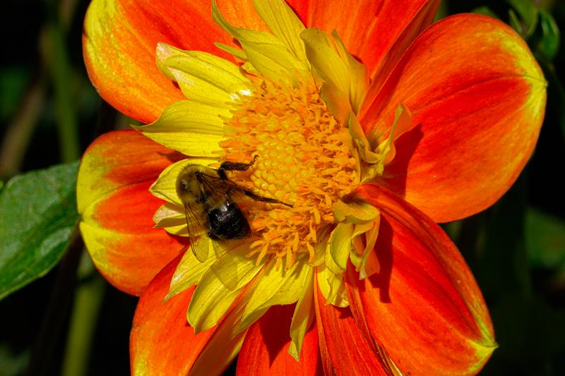 Francis-Sunflowers-06