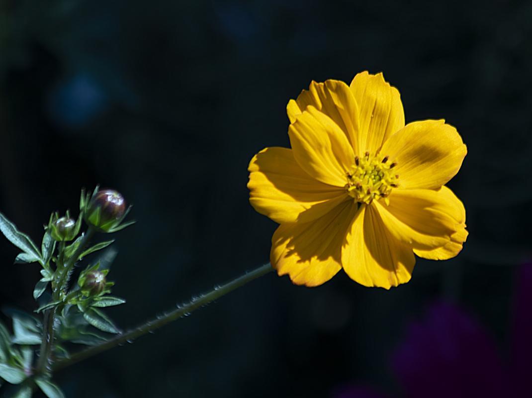 gerry-boretta-sunflower-shoot-1